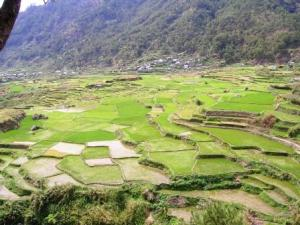 Sagada rice terraces 1