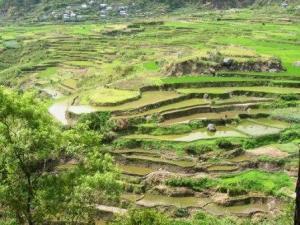 Sagada rise terraces 2