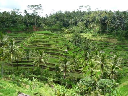 rice-terraces-view