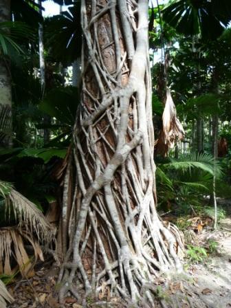 Stranglers tree