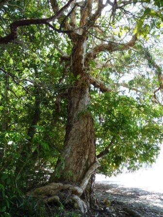 ? Tree