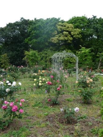 Rare Rose Garden