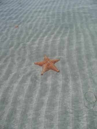 Playa estrella6